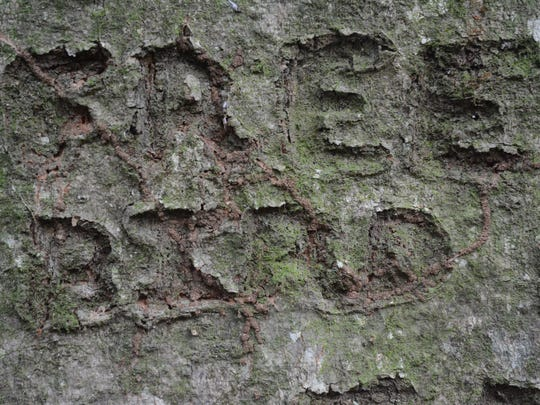 """Free Bird,"" one of Lynyrd Skynyrd's most popular songs, is carved into an oak tree near the original band member plane crash site. Survivors of the crash returned to the site 40 years later on Oct. 20, 2017."
