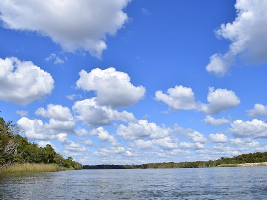Learn about bird life along the Apalachicola River.