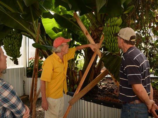 Mark Goodin shows off a plethora of the bananas growing inside the Floating Leaf Family Farm greenhouse to Ross Young and Elizabeth Ayers of the Madison County Cooperative Extension Office.