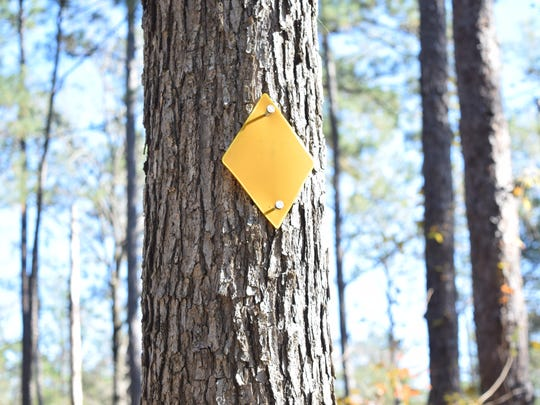 The yellow diamond-shaped blaze denotes the Wild Azalea Trail is the longest continuous trail in Louisiana. The WAT winds through the Kisatchie National Forest in Central Louisiana. It spans about 28  miles from Woodworth to Valentine Lake. River Oaks Square Artistic director Aubrey Bolen has turned the different trail blazes, or trail markers, of the local trails into art.