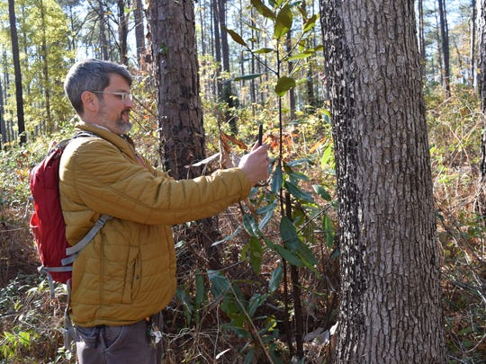 ÒIÕve been out there trying to find distinct features,Ó said River Oaks Square Artistic director Aubrey Bolen about the Wild Azalea Trail. Features include the pine forests, upland hardwoods, bogs, seeps and open natural areas. His work will also feature the way the light filters through the trees onto the trail. ÒThatÕs what I wanted to capture with these recent works that I am working on for my show,Ó said Bolen. His show will open in February 208 at the River Oaks Square Arts Center.