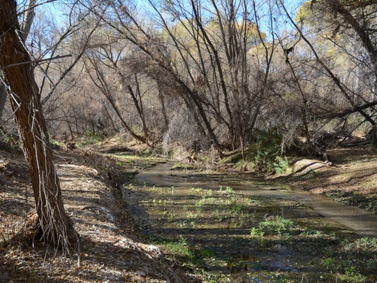 The Hassayampa River is always above ground in the area of the Hassayampa River Preserve near Wickenburg.
