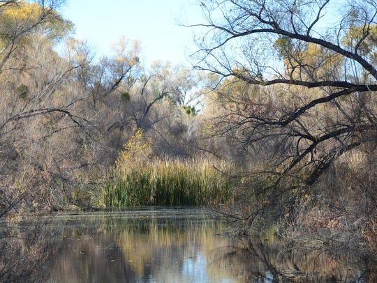 Palm Lake at the Hassayampa River Preserve near Wickenburg.