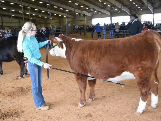Harlie Harvey, an Evans High School student with the Vernon Parish 4-H, won her division in the beef cattle show at the Central District Livestock Show held Saturday at the Dewitt Livestock Facility.