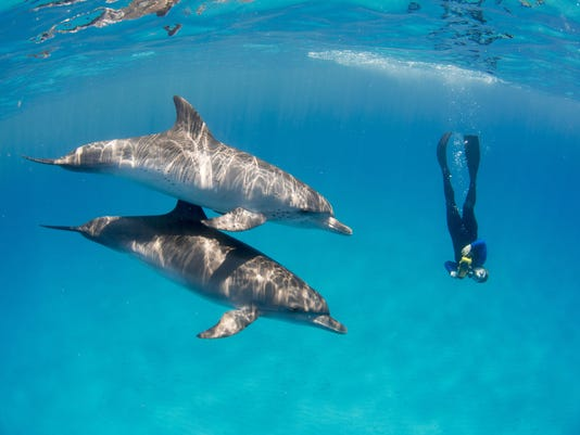 0301-JCNW-DenisewithDolphins-photographer-BethanyAugliere.jpg