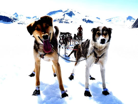 Eiger and Mocha lead Shaynee Traska's dogsled team under the summer sun during a training run on a glacier outside of Juneau, Alaska. Both dogs will be part of Traska's 16-dog Iditarod team when she competes later this week.