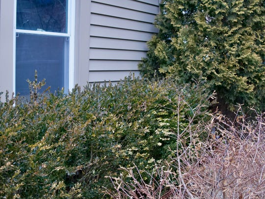 Trimmed shrubs eliminate hiding places for would-be burglars.