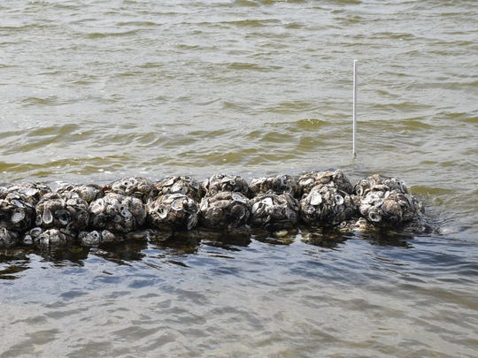 """Escambia County installed a """"living reef"""" of oyster"""