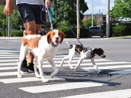 Pedestrians walk their dogs at the intersection of