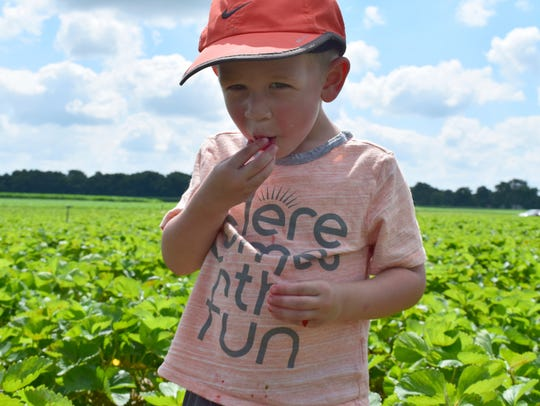 Nolan Pieper, 2, of Rockford, tastes a strawberry he