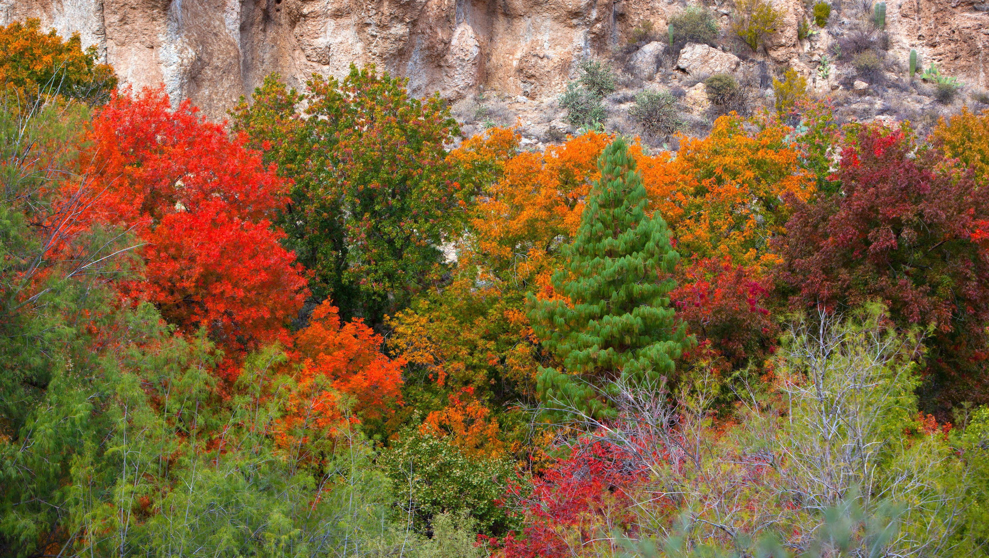 Fall Colors In Arizona 28 Images Widforss