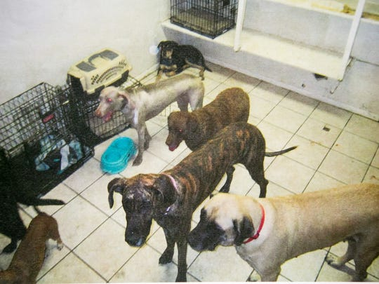 Snow Aubel's dogs, Cheyenne (gray, upper left) and Yepa (brown, middle), in a photo taken by the Maricopa County Sheriff's Office on June 21.
