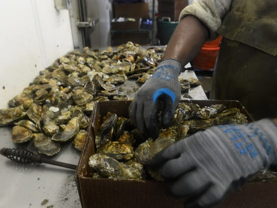 Johnny Wharton packages fresh oysters after cleaning