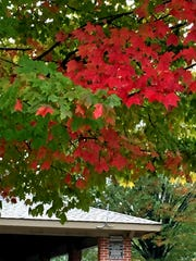 Leaves are changing to their fall colors before resting