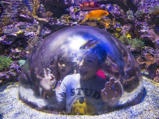 Children look at fish at the Arizona Sea Life Aquarium.