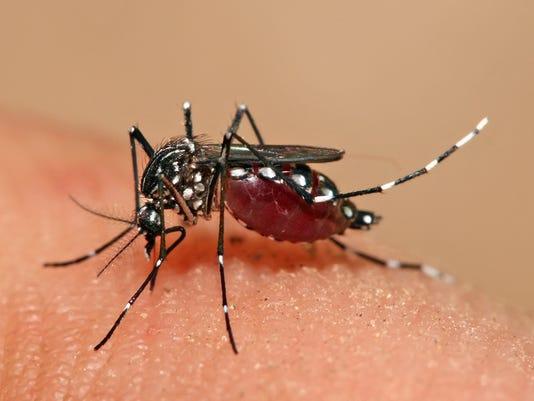 Aedes_aegypti_feeding.jpg