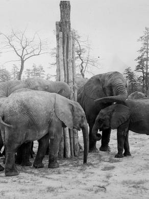 1974: African elephants at Great Adventure