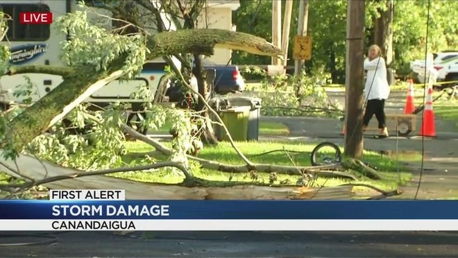 Witnesses said lightning took this tree down in Canandaigua on Wednesday.