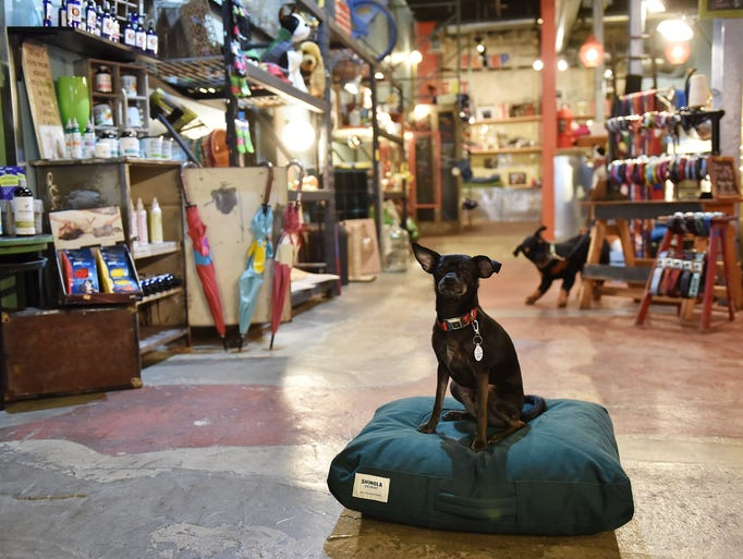 """Elroy, the """"CEO"""" of 3 Dogs 1 Cat Urban Pet Shoppe near"""