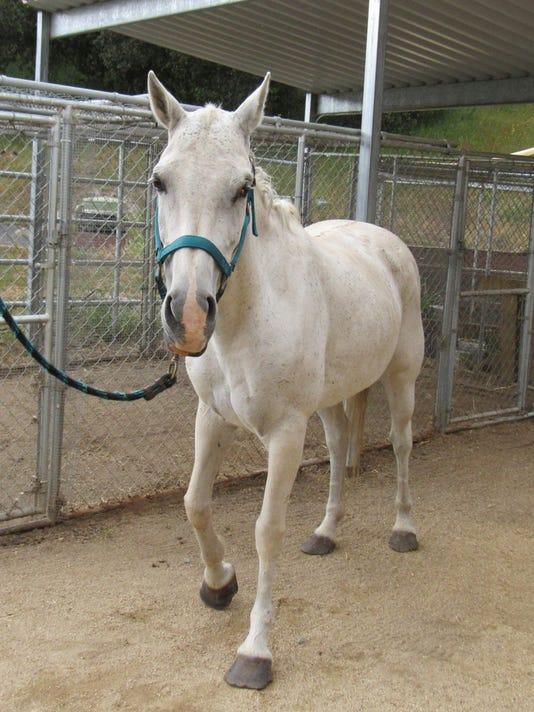 Abanoned-Pony.jpg
