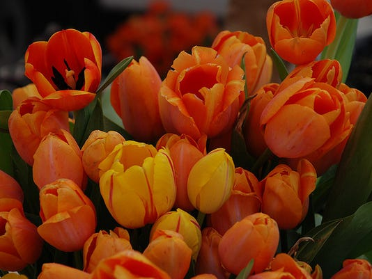 Beautiful Blooms from Forcing Bulbs