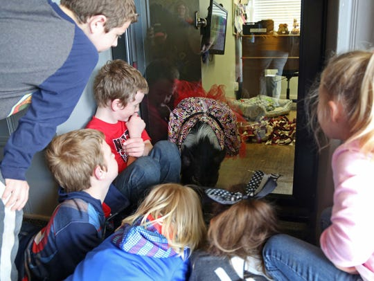 A group of children get a look at Joy, the mini pig