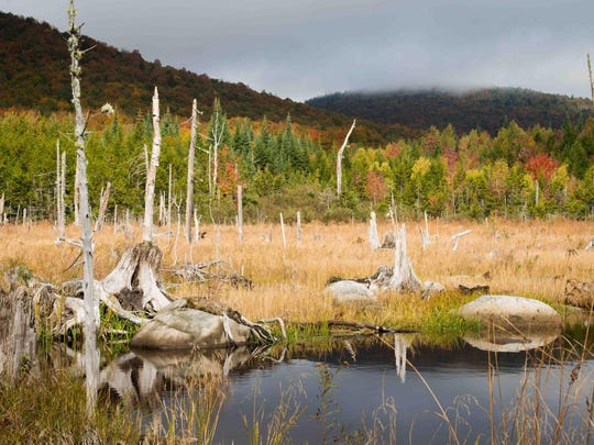 A view of Victory Basin Wildlife Management Area in the town of Victory Vermont's Northeast Kingdom.