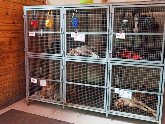 The Greyhound Rescue Center in Millville is  ready for  the greyhounds to be adopted.