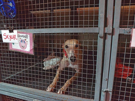 Greyhound Rescue Center 8.jpg