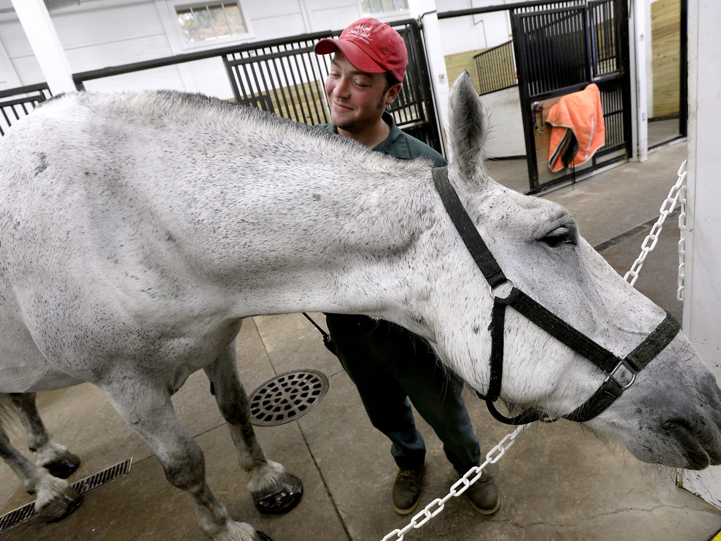 Ryan Lieblang scratches the neck of a percheron horse