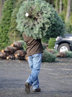 Those in the Christmas tree industry are skeptical those sold via Amazon will replace the tradition of selecting a tree from tree farms and lots.
