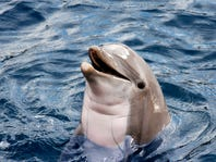 Save over 30% at SEAWORLD® SAN DIEGO