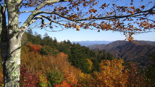 Early October color from the parking lot at Newfound Gap in this October 2011 photo.