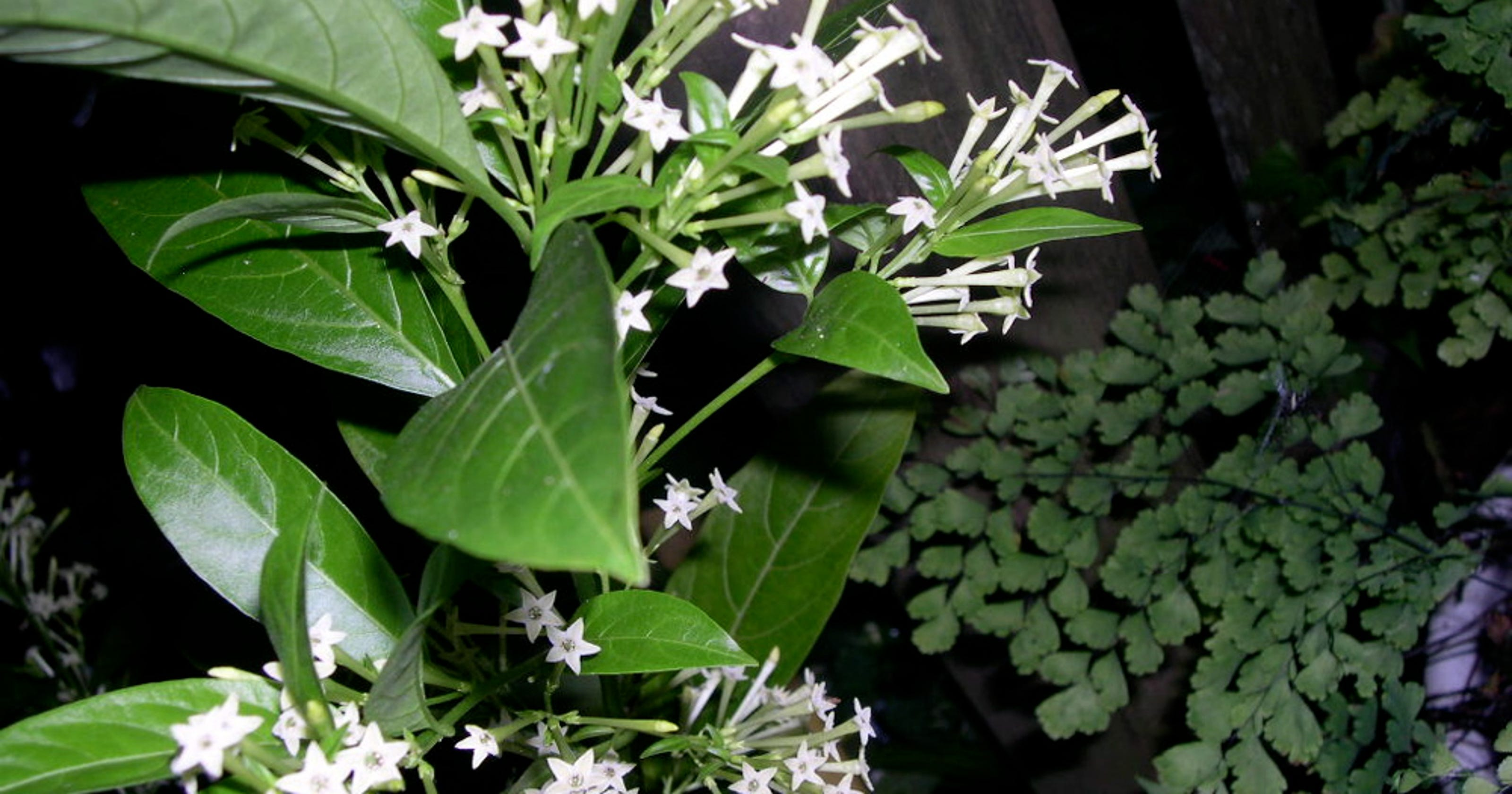 Fragrant plants add wonderful scents in late summer izmirmasajfo