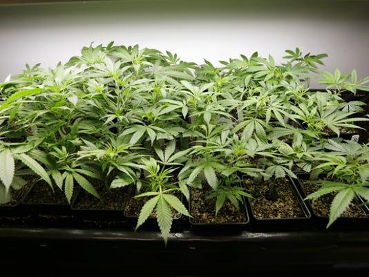 legalizing_marijuana__john__op_3_cp__3441012_ver1.0_640_480.jpg