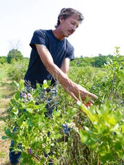 Owner Jeffery Utech goes through his blueberries and explains the pruning process Monday afternoon at Utech's Rainbow Farm in the village of Maine.