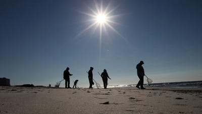 Cleanup crews search for oily tar balls along the beach in 2011 after the BP oil spill.