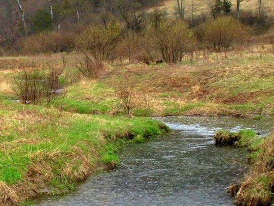 Manure run-off caused by the heavy rains can be deadly to trout.