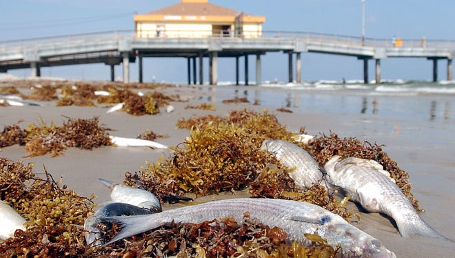 Red tide blooms kill fish, cause respiratory distress in humans, and exact an immeasurable financial toll on coastal economies.