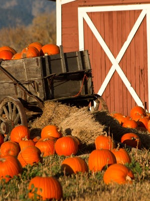 MSU Tollgate Farm hosts a Pumpkinfest the weekend of Oct. 8-9.
