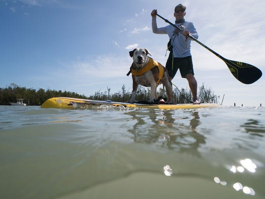 636541443847516473-Paddler-with-Dog.jpg