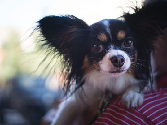 Dog ordinance 5.jpg