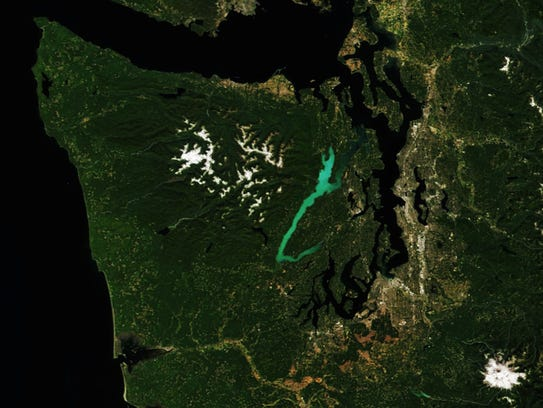 The bright green plankton blooms in Hood Canal can