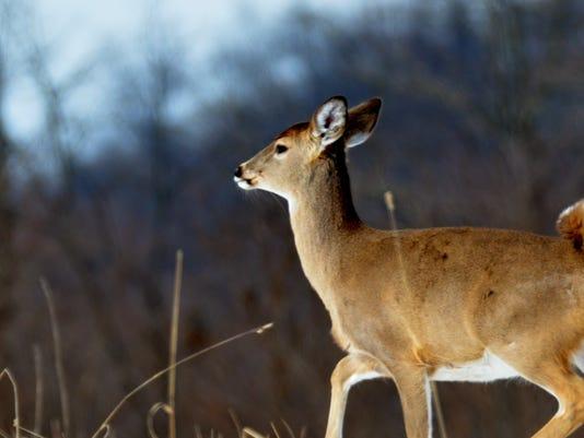 1-LDN-SUB-010316-running-deer.jpg