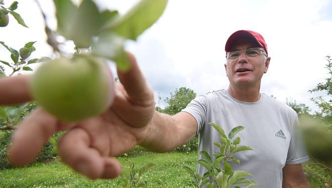 Jeff Burrer inspects his apples Tuesday at the Springhill Fruit Farm near Shiloh.
