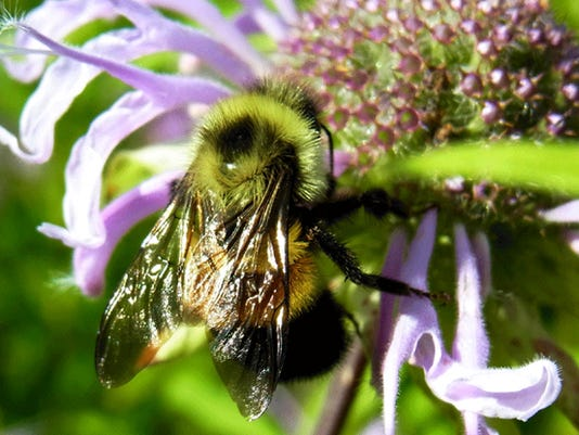 WSF 0706 Pollinators 1