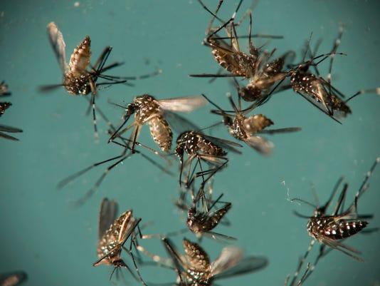 Zika Brazil Mosquitoes