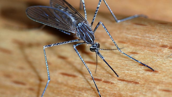 Etowah County officials say there are pesticides available at stores for people to do their own spraying, and recommend eliminating standing water, where mosquitoes breed, as another way to control the insects.