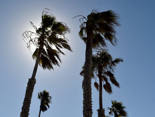 The tops of palm trees sway in the wind at Hueneme Beach in this file photo.