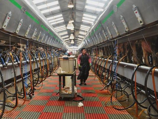 dairy-cows-2.jpg
